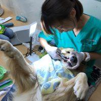 無麻酔歯石取り1