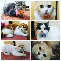 CATグルーミング