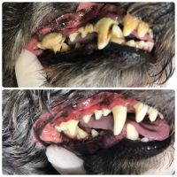 歯石取り使用前使用後