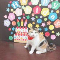 CATお誕生日プレゼント祝い画像